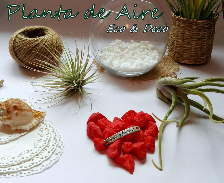 Planta de aire com eco deco Plantas limpiadoras de aire